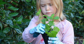 Top 5 Garden Herbs