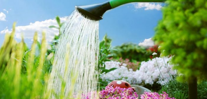 Tips To Save Water in Your Garden